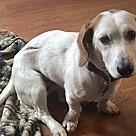Adopt A Pet :: Duchess