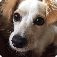 Adopt A Pet :: Boy George (Georgie) - Quail Valley, CA