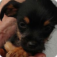 Adopt A Pet :: Oscar - Bellingham, WA
