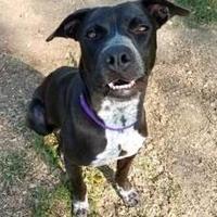 Adopt A Pet :: Tiana - DeSoto, IA