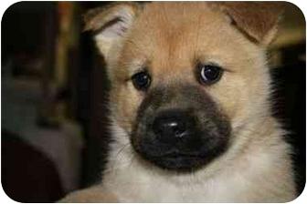 Husky Mix Puppy for adoption in Marietta, Georgia - Homer