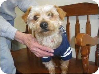 "Terrier (Unknown Type, Small) Mix Dog for adoption in MARION, Virginia - ""Mike"""