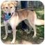 Photo 2 - Collie/German Shepherd Dog Mix Dog for adoption in Cincinnati, Ohio - Nala