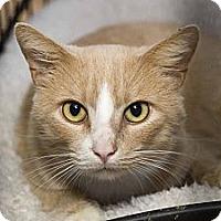 Adopt A Pet :: Gibbs - New Port Richey, FL