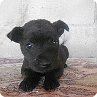 Adopt A Pet :: Payton - San Diego, CA