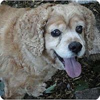 Adopt A Pet :: Jazz - Rigaud, QC