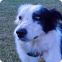 Adopt A Pet :: Patches - Frisco, TX