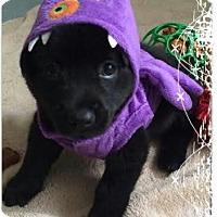 Adopt A Pet :: Kelly - Phoenix, AZ