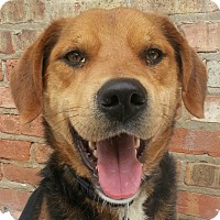 Adopt A Pet :: Farley(ADOPTED!) - Chicago, IL