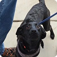 Adopt A Pet :: Bella - Arden, NC