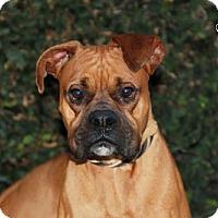 Adopt A Pet :: Mustafa - Los Angeles, CA
