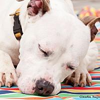 Adopt A Pet :: Ghost - Long Beach, NY