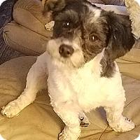 Adopt A Pet :: Pepper - Detroit, MI
