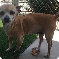 Adopt A Pet :: Daisy - Chula Vista, CA