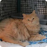 Adopt A Pet :: Peachy - Lakewood, CO
