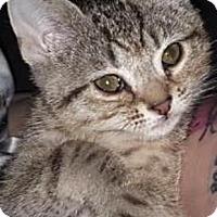 Adopt A Pet :: Squidward $20 - Lincolnton, NC