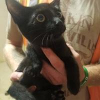 Adopt A Pet :: Sabrina - Russellville, KY