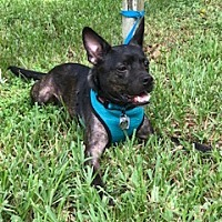 Adopt A Pet :: Knox - Davie, FL