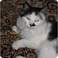 Adopt A Pet :: Rocky - Jenkintown, PA
