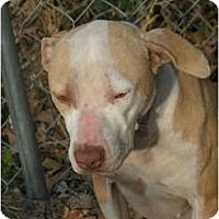 Adopt A Pet :: Piper - Bloomingdale, GA