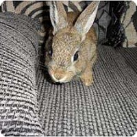 Adopt A Pet :: Harper - Maple Shade, NJ