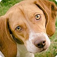 Adopt A Pet :: Jackie O - Phoenix, AZ