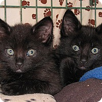Adopt A Pet :: Peeko - Portland, OR