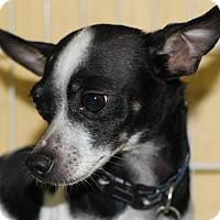 Adopt A Pet :: Izzy - Kempner, TX