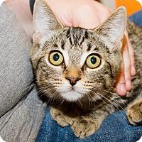 Adopt A Pet :: Patti - Irvine, CA