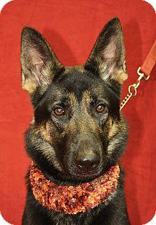 German Shepherd Dog Dog for adoption in Jackson, Michigan - Sheriff