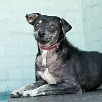 Adopt A Pet :: Duchess - Roanoke, VA