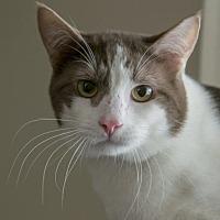 Adopt A Pet :: Highway 2 - Edmonton, AB