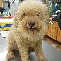 Adopt A Pet :: Trinity - Colfax, IL