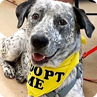 Adopt A Pet :: Winston - Maryville, TN