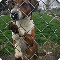 Adopt A Pet :: Charlie - Cambridge, ON