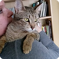 Adopt A Pet :: Olive-$50 - Naperville, IL