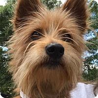 Adopt A Pet :: Angela - geneva, FL