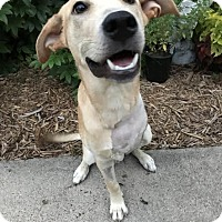 Adopt A Pet :: Eastwood - Houston, TX
