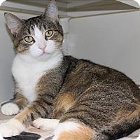Adopt A Pet :: Penny - Duluth, MN