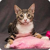 Adopt A Pet :: Beatrix - Davis, CA