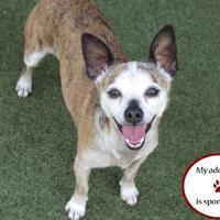 Adopt A Pet :: Juno - Petaluma, CA
