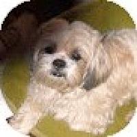 Adopt A Pet :: Aspen - Crofton, MD