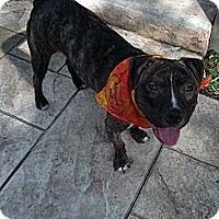 Adopt A Pet :: Titus - Indianapolis, IN
