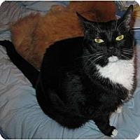 Adopt A Pet :: Little Bit - Greenville, SC