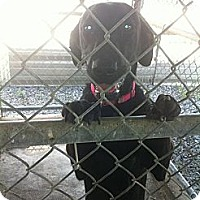 Adopt A Pet :: no name - Donaldsonville, LA