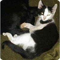 Adopt A Pet :: Oreo - Greenville, SC