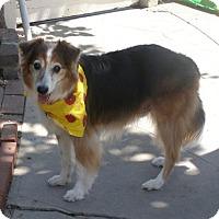 Adopt A Pet :: Snoop Dog - Riverside, CA