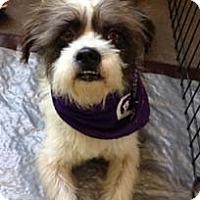 Adopt A Pet :: LEROY - Salt Lake City, UT