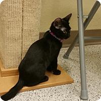 Adopt A Pet :: Nani - Phoenix, AZ