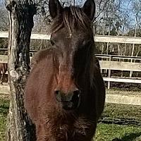 Quarterhorse Mix for adoption in Hitchcock, Texas - Gina